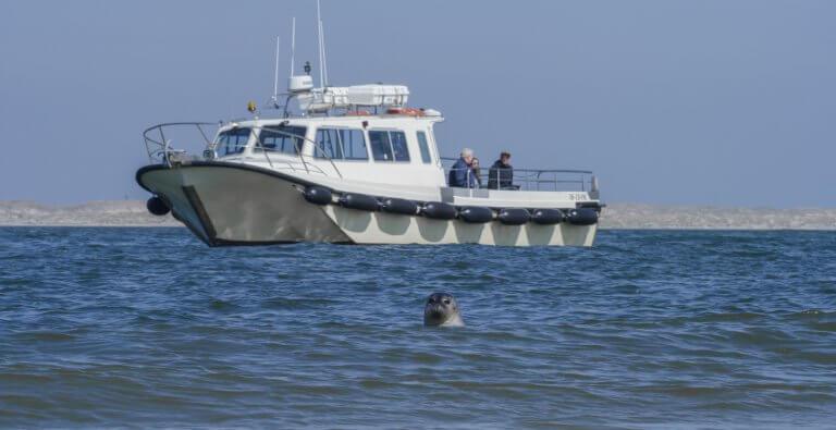 Het Sop zeehondentochten in Oudeschild op Texel