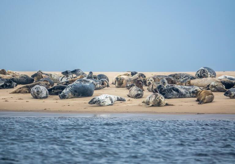 Rustende zeehonden op een zandplaat in de Noordzee