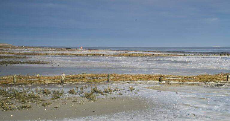 De Schorren is een divers natuurgebied aan de buitendijk van Texel