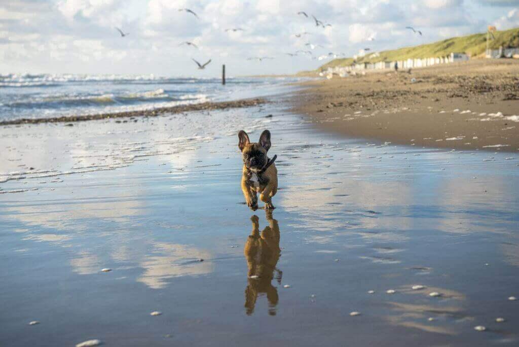 Lekker rondrennen op het strand