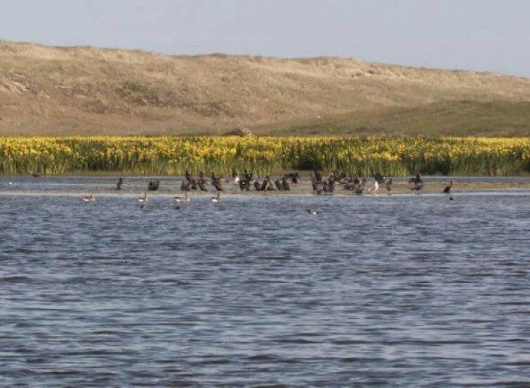 Het Grote Vlak is een natuurgebied met afwisselende flora en fauna