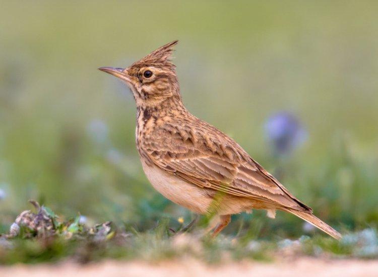 In natuurgebied De Slufter op Texel vindt u vele soorten vogels