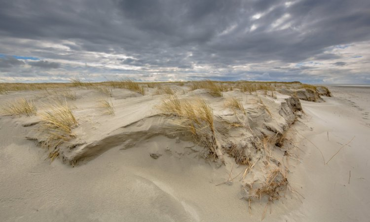 Formation of Young Dune landscape on Rottumerplaat island in the Waddensea, Netherlands