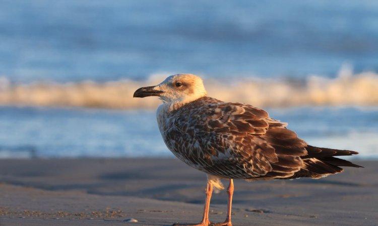 a beautiful seagull standing on a lake